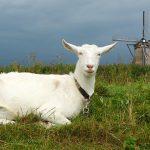 כרטיסי הנחה בהולנד | לחסוך וליהנות