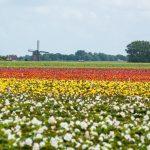 מסלול טיול בהולנד