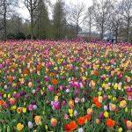 פרחים וצבעונים